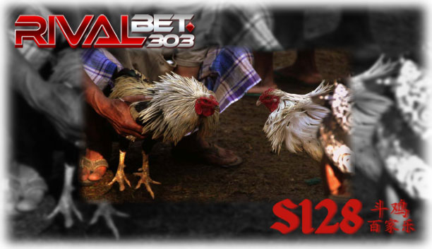 Game Adu Ayam Online Situs S128 (Recommended)